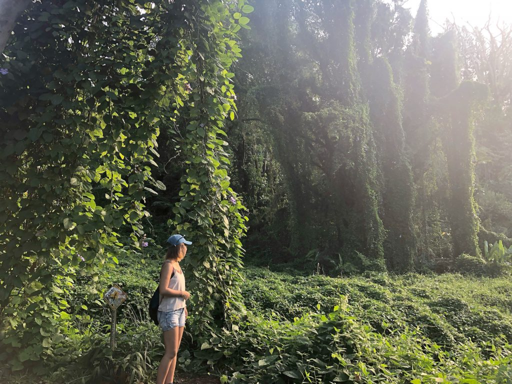 マノア マノアフォール ハイキング トレイル ハワイ オアフ 大自然